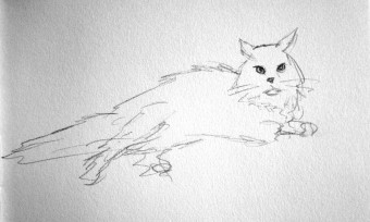 cat_sketch3_edited-1